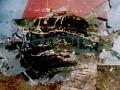 Экспедиция Усть-Кутская тайга (2003) (1)